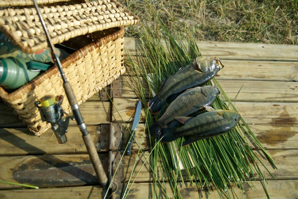 Fishing in the Okavango Delta