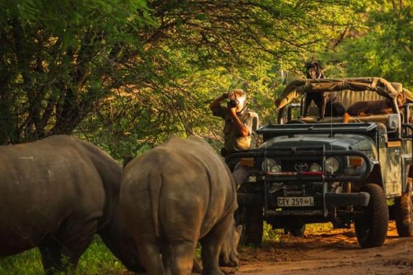 Rhinos and game drive vehicle
