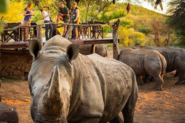 Rhinos with people on deck