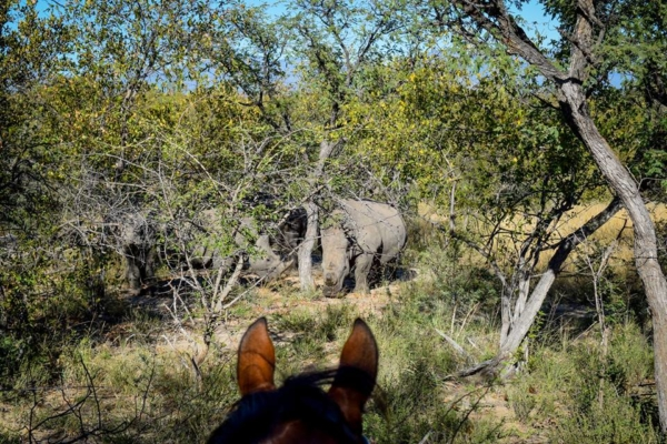 Rhino enounter on horseback