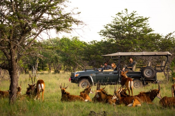 Game drive with sable antelope