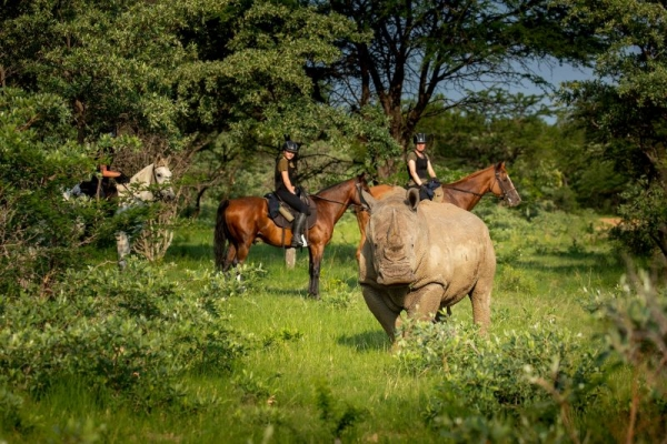 Horse riding with rhino