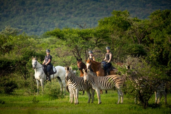 Horse riding with zebra