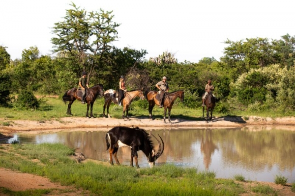 Horse riding with sable antelope