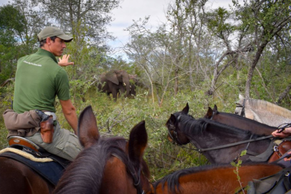 Encountering elephant on horseback