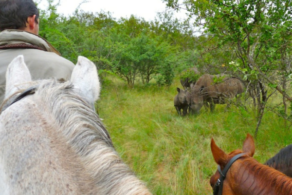Encountering rhino on horseback