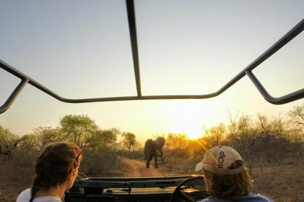 Sunset Game Drives