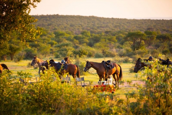Horses next to picnic table