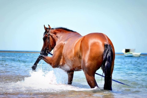 Horse splashing in the ocean