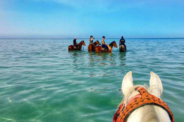 Horses swimming in Red Sea