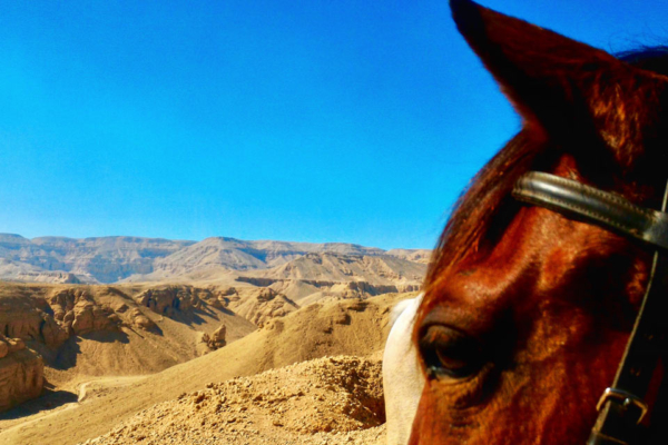 Egyptian desert seen through horses ears