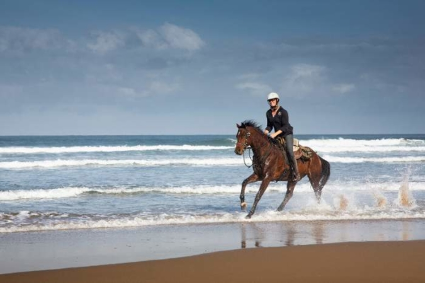horse galloping on the beach