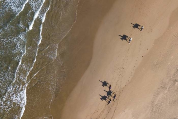 Arial view of horses on the beach