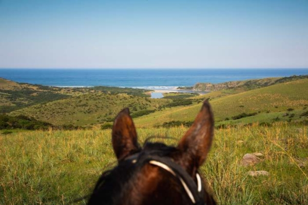 Coastal view through horses ears
