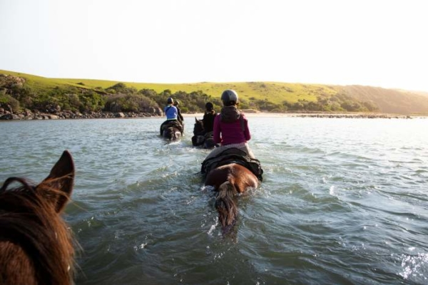 Horses swimming through river