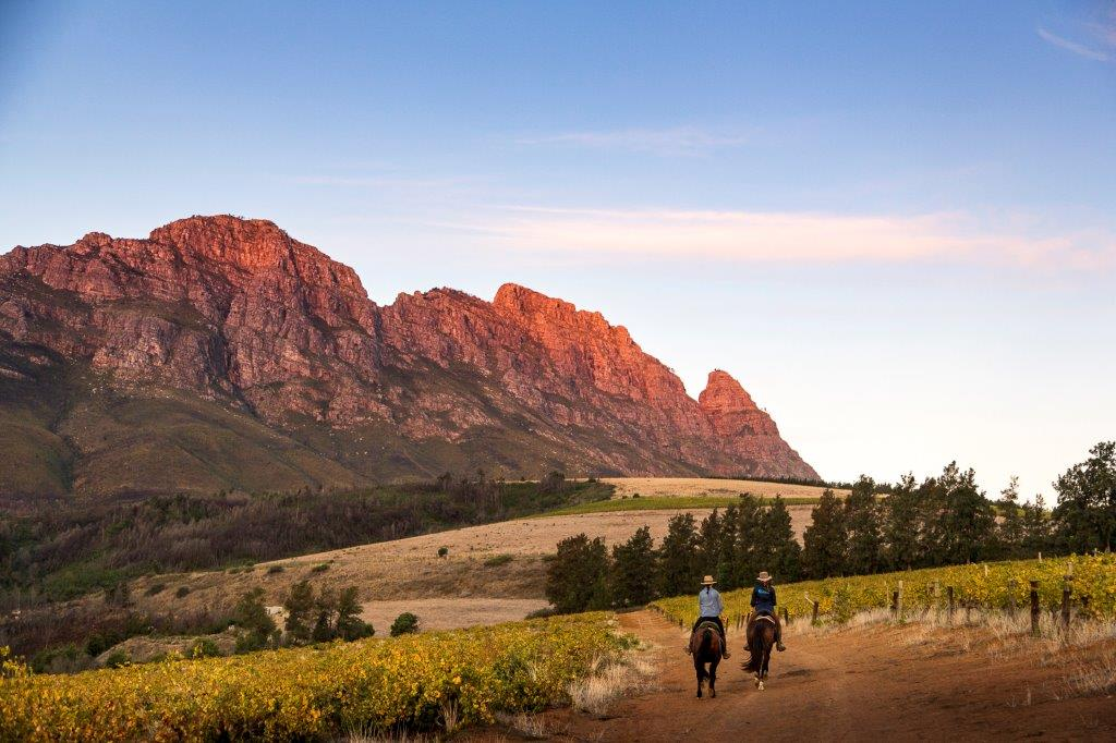 Horse riding in the Cape Winelands where the mountains turn pink