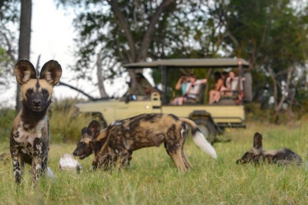 Game drive with wild dog