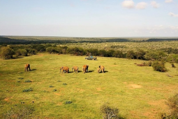 Afternoon game drives