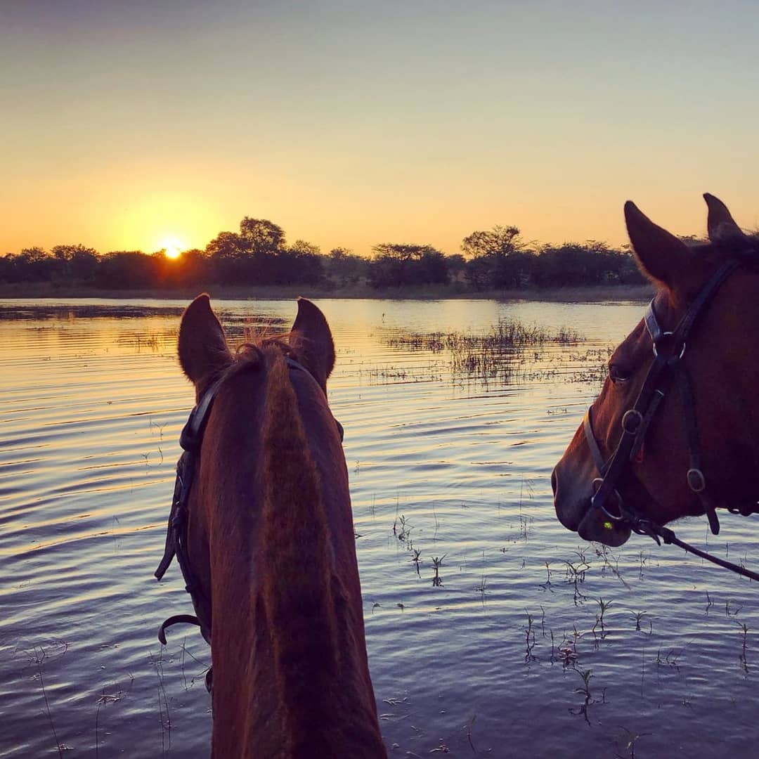 Two horses looking over water at sunset