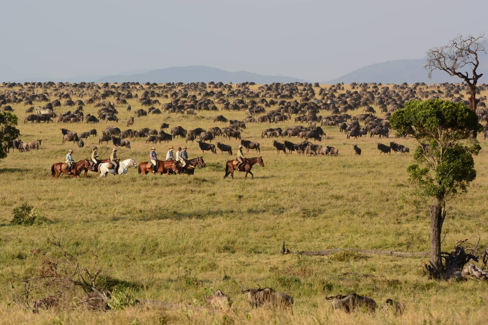 Horse riding with wildebeest migration