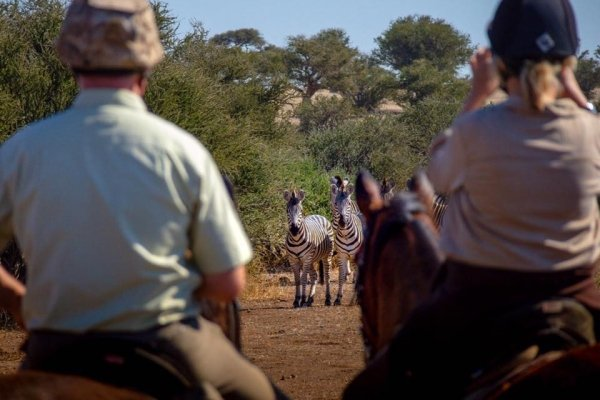 Zebra encounter on horseback