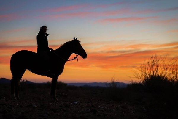 horse and rider at sunset