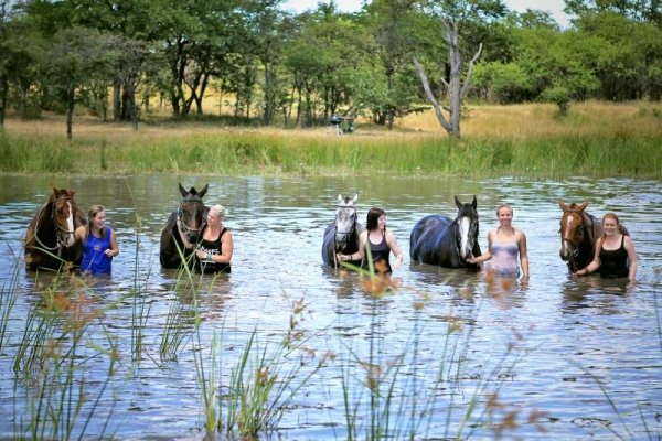 Horseback swims in Zimbabwe