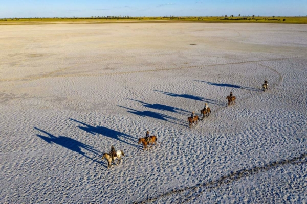Horses with shadows on white salt pan