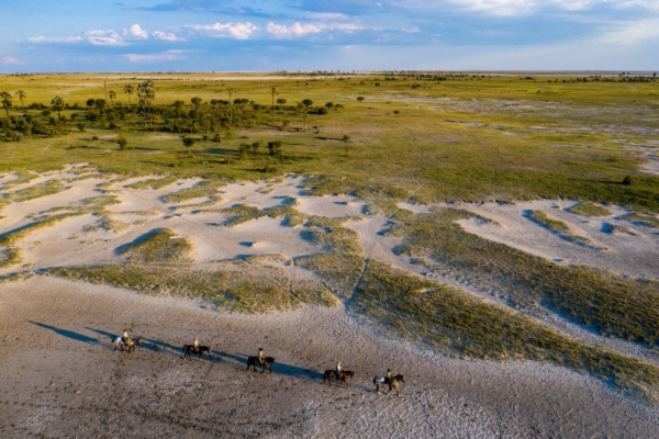 Line of horses on the edge of the salt pans