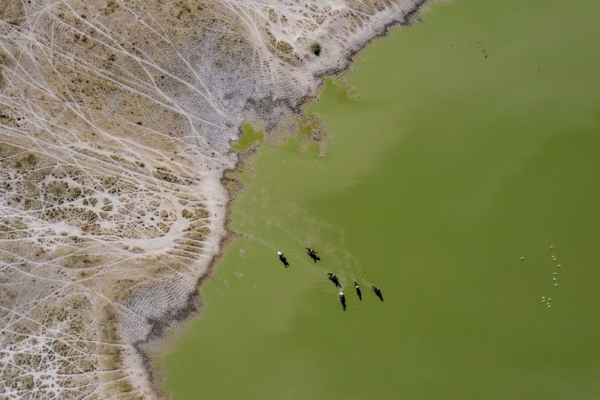 Aerial view of horses riding in salt pan