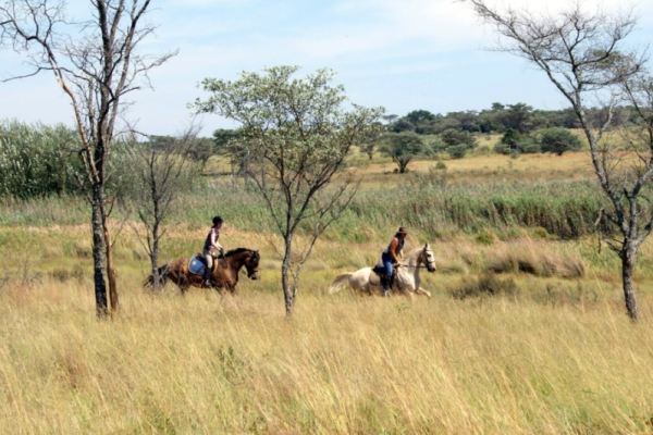 Horse riders galloping in long grass