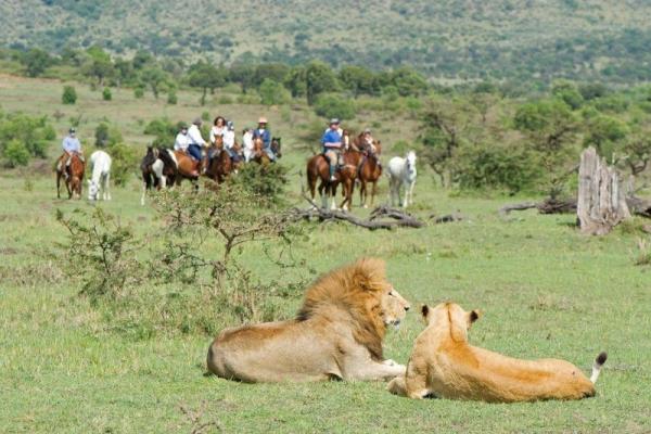 lions seen on horseback