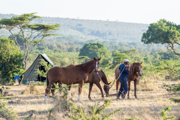 Man with three horses in Kenya