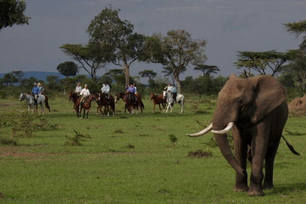 horse riding with elephants