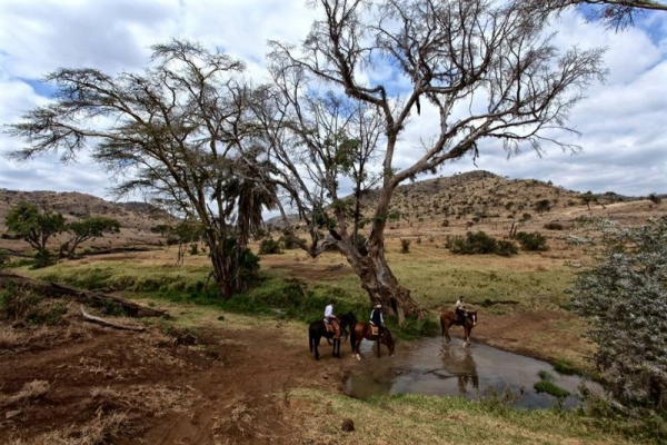 horses drinking water from a pool under a tree
