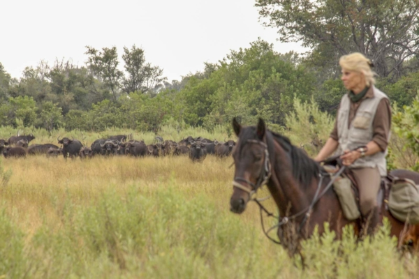 Woman on horse watching herd of buffalo