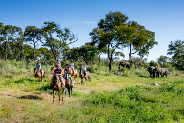 horse riders with elephants