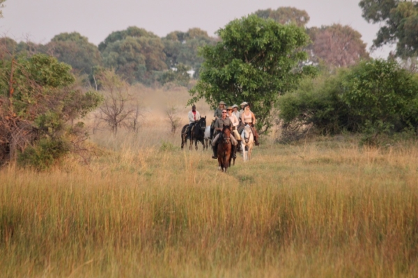 Group of horses walking in savanna