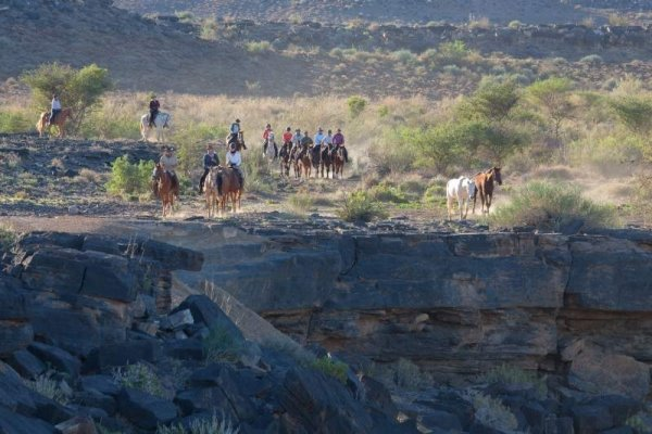 Horses on the edge of the canyon