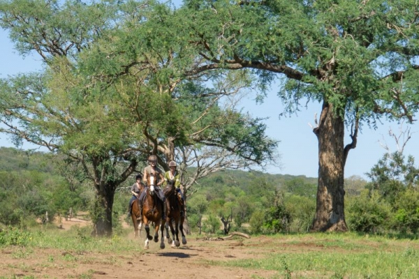 Horses galloping under tall trees