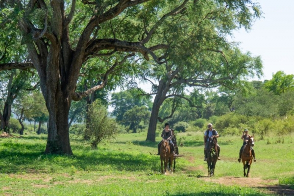 Horse riding under large trees