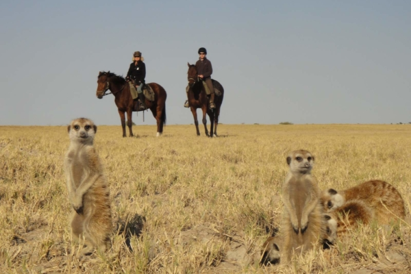Meerkats with horse riders