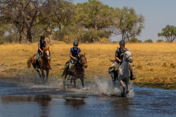 Horses galloping in the Okavango Delta