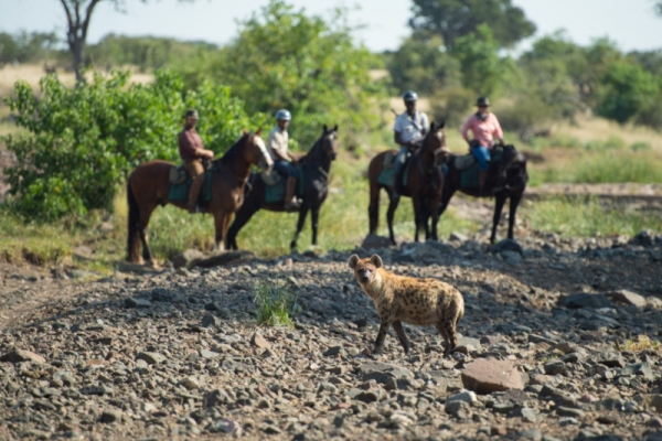 horse riding with hyena