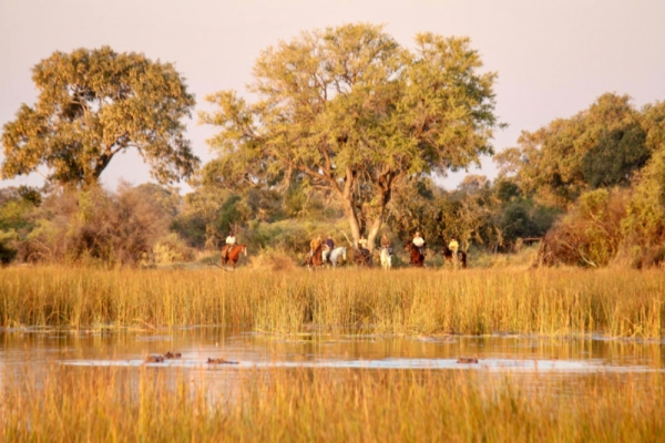 Sunset horse riding in the Okavango Delta