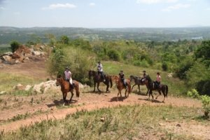 Horses trotting up a dirt road onto a hill overlooking Ugandan countryside