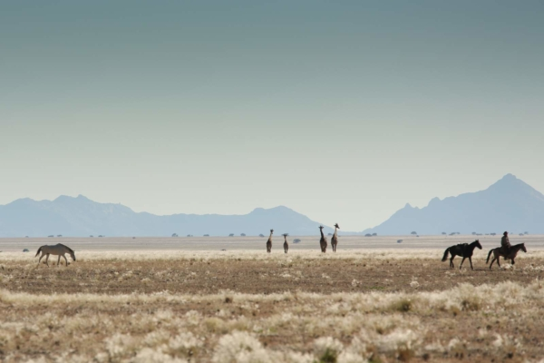 Fast paced riding on endless plains