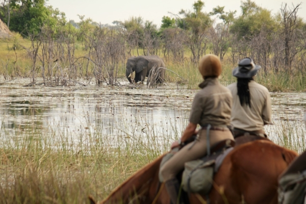 Horseback riders watching elephant in river