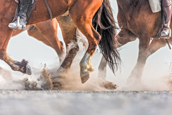 Horses legs galloping on dusty ground