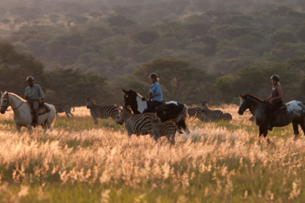 horse rider and zebra at sunset
